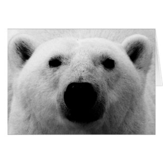 Ours blanc noir et blanc cartes
