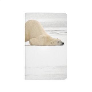 Ours blanc se rayant sur la toundra congelée carnet de poche
