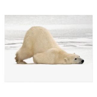 Ours blanc se rayant sur la toundra congelée carte postale