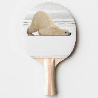 Ours blanc se rayant sur la toundra congelée raquette tennis de table