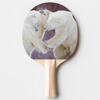 Ours blancs sparring 2 raquette tennis de table