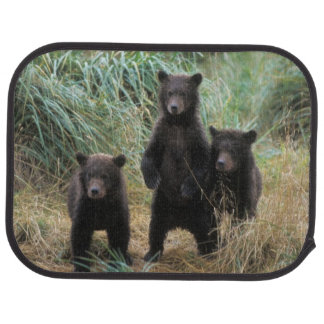 ours brun, arctos d'Ursus, ours gris, Ursus 7 2 Tapis De Voiture