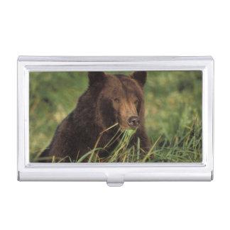 ours brun, arctos d'Ursus, ours gris, Ursus 7 Boîtier Pour Cartes De Visite