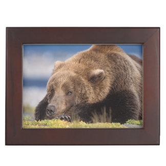 ours brun, arctos d'Ursus, ours gris, Ursus 8 Boîtes À Souvenirs