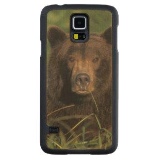 ours brun, arctos d'Ursus, ours gris, Ursus 9 Coque Slim Galaxy S5 En Érable