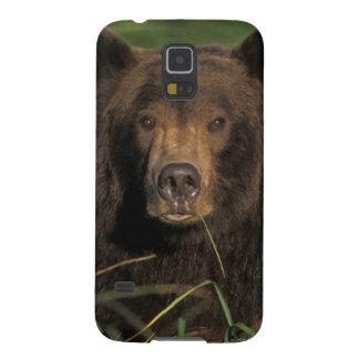 ours brun, arctos d'Ursus, ours gris, Ursus 9 Coques Pour Galaxy S5