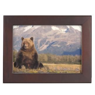 ours brun, arctos d'Ursus, ours gris, Ursus Boîtes À Souvenirs