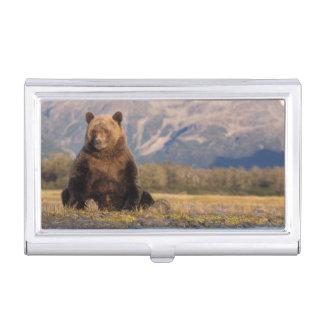 ours brun, arctos d'Ursus, ours gris, Ursus Boîtier Pour Cartes De Visite