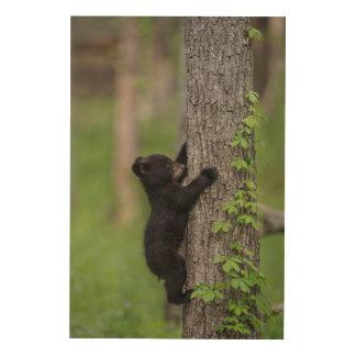Ours CUB grimpant à un arbre Impression Sur Bois