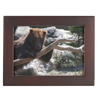 Ours de Brown de détente Boîte À Souvenirs