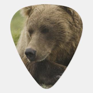 Ours de Brown, ou ours gris côtier, Ursus Onglet De Guitare