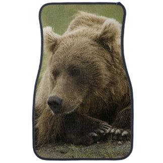 Ours de Brown, ou ours gris côtier, Ursus Tapis De Voiture