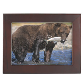 Ours de Brown, ours gris, avec le crochet saumoné, Boîte À Souvenirs