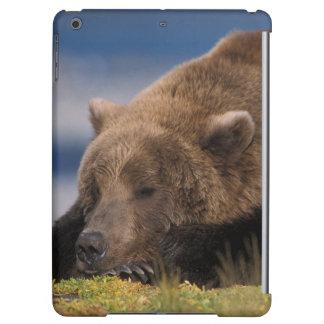 Ours de Brown, ours gris, prenant un petit somme,