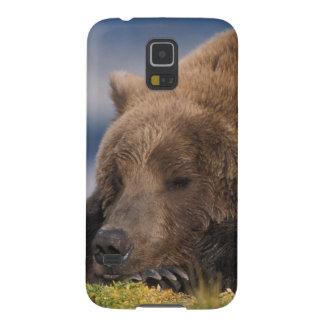 Ours de Brown, ours gris, prenant un petit somme, Protections Galaxy S5