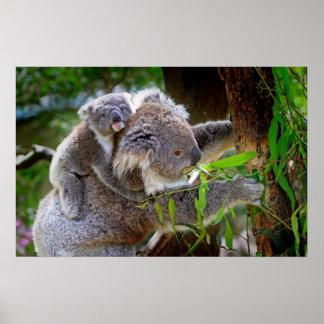 Ours de koala mignon de bébé avec la maman dans un affiche
