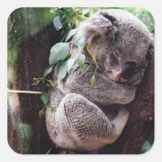 Ours de koala mignon détendant dans un arbre sticker carré