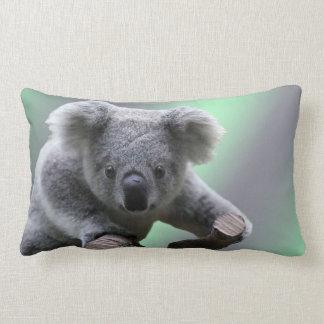 Ours de koala oreiller