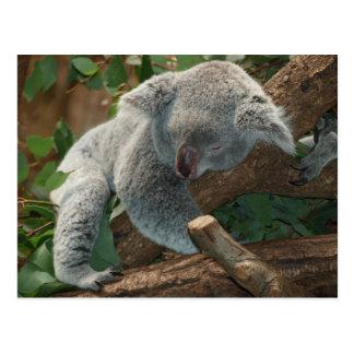 Ours de koala si mignon cartes postales