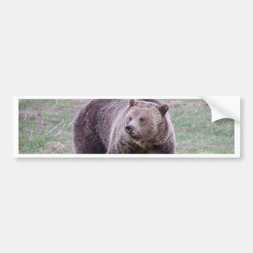 Ours gris autocollant pour voiture