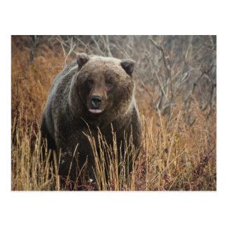 Ours gris avec des lèvres de myrtille cartes postales