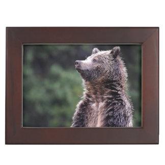 Ours gris debout boîtes à souvenirs