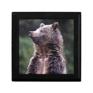 Ours gris debout petite boîte à bijoux carrée
