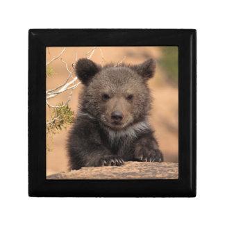 Ours gris (horribilis d'arctos d'Ursus) Petite Boîte À Bijoux Carrée