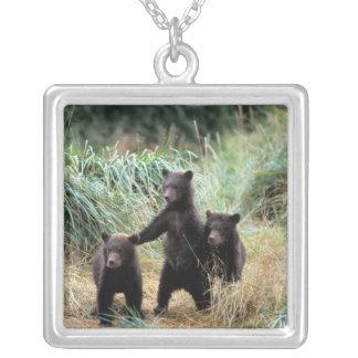 Ours gris, ours brun, petits animaux dans les collier