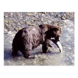 Ours gris pêchant un poisson sur l'île de Vancouve Cartes Postales