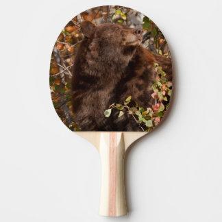Ours noir recherchant des baies d'automne raquette de ping pong