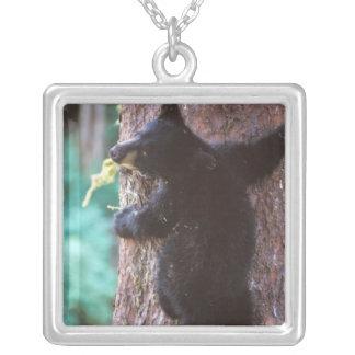 ours noir, Ursus américanus, petit animal dans Collier