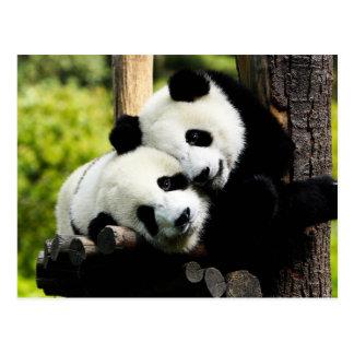 Ours panda carte postale