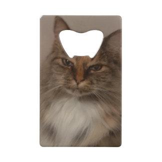 Ouvreur de bouteille de chat de calicot
