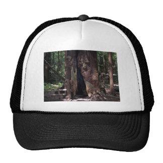 Ouvrez la base d'un grand séquoia casquettes de camionneur