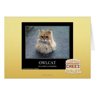 Owlcat Cartes