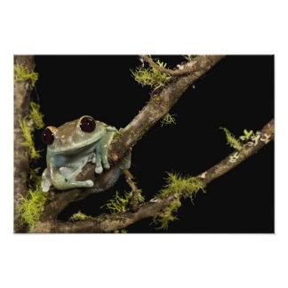 PA centrale, les Etats-Unis, grenouille marron de  Photographie D'art