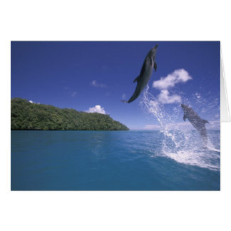 Pacifique, Micronésie, Palaos, Bottlenose 2 Carte De Vœux