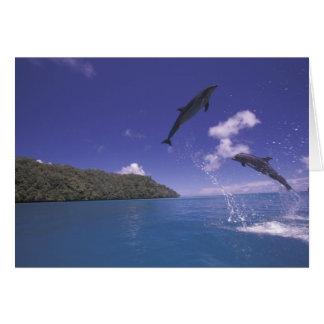 Pacifique, Micronésie, Palaos, Bottlenose 3 Carte De Vœux