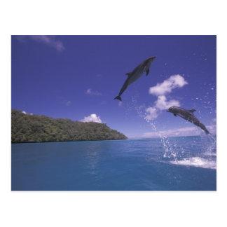 Pacifique, Micronésie, Palaos, Bottlenose 3 Carte Postale