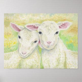 Paires d'agneau poster