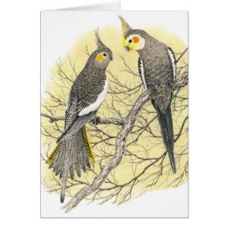 Paires de Cockatiel - hollandicus de Nymphicus Carte De Vœux