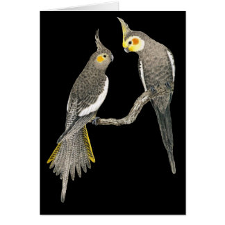 Paires de Cockatiel - hollandicus de Nymphicus sur Carte De Vœux