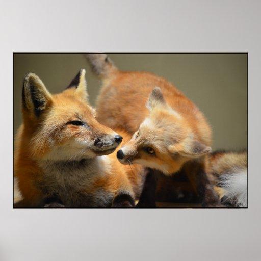 Paires de Fox rouge Affiche