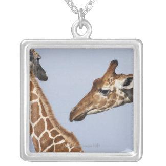 Paires de girafes réticulées (Giraffa) Pendentif Carré