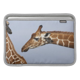 Paires de girafes réticulées (Giraffa) Poches Macbook
