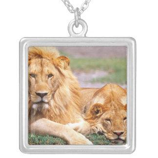 Paires de lions africains, Panthera Lion, Tanzanie Collier