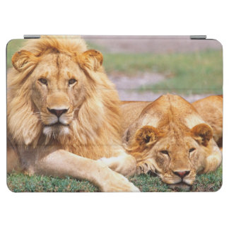 Paires de lions africains, Panthera Lion, Tanzanie Protection iPad Air