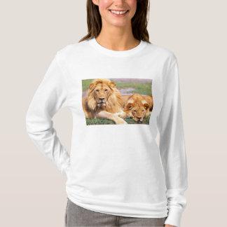 Paires de lions africains, Panthera Lion, Tanzanie T-shirt