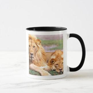 Paires de lions africains, Panthera Lion, Tanzanie Tasse